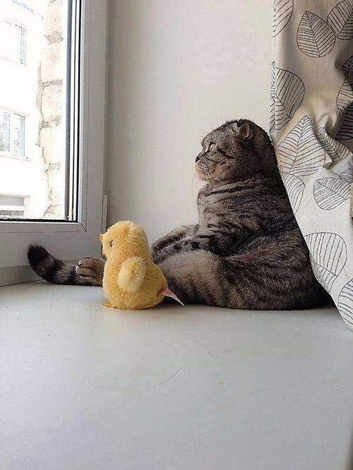 duck and cat IMG